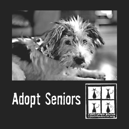 adopt seniors snoopy
